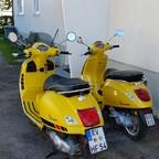 Das gelbe Paar !