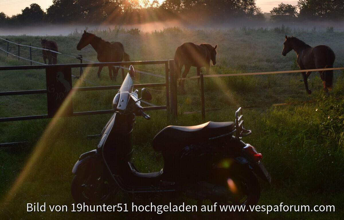 Pferdekoppel an der Woldlinie, Bad Zwischenahn, Petersfehn II, Vespa GTS 300